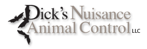 Dick's Animal Nuisance Control, LLC | Willmar, Mn